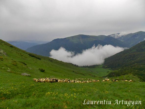 Turma de oi - Godeanu