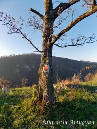 Marcaj limita rezervatie copac