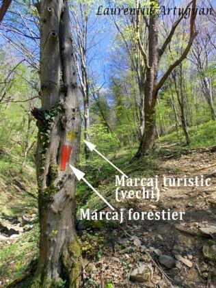 Marcaj turistic si marcaj forestier copac