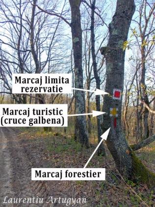 Marcaje diferite pe copac