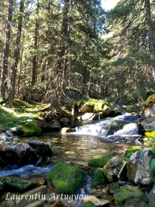 Coborare prin Valea Stanisoara