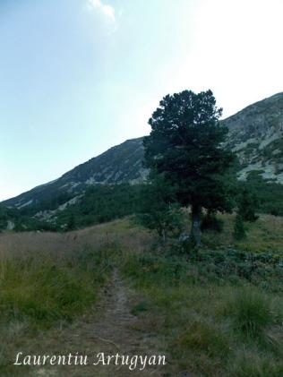 Marcaj triunghiu albastru Valea Stanisoara Retezat