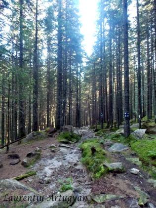Prin padure Valea Stanisoara