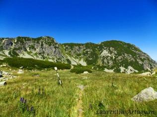 Valea Rea gol alpin