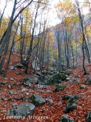 Prin Valea Cernei