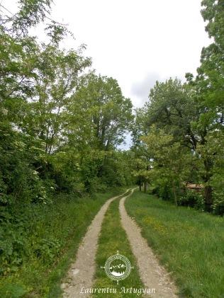 Drum forestier spre Comarnic