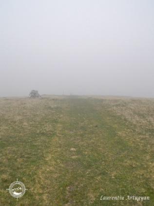 Momaie in ceata Tarcu