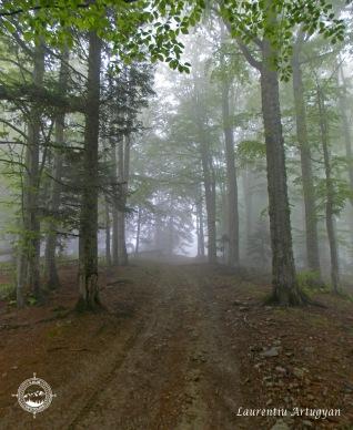 Prin ceata prin padure