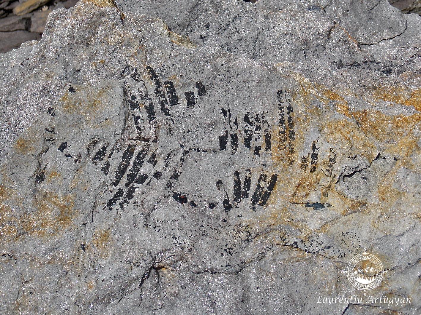 Talva Zanei - plante fosile