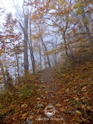 Urcare prin ceata spre Crucea Alba Domogled