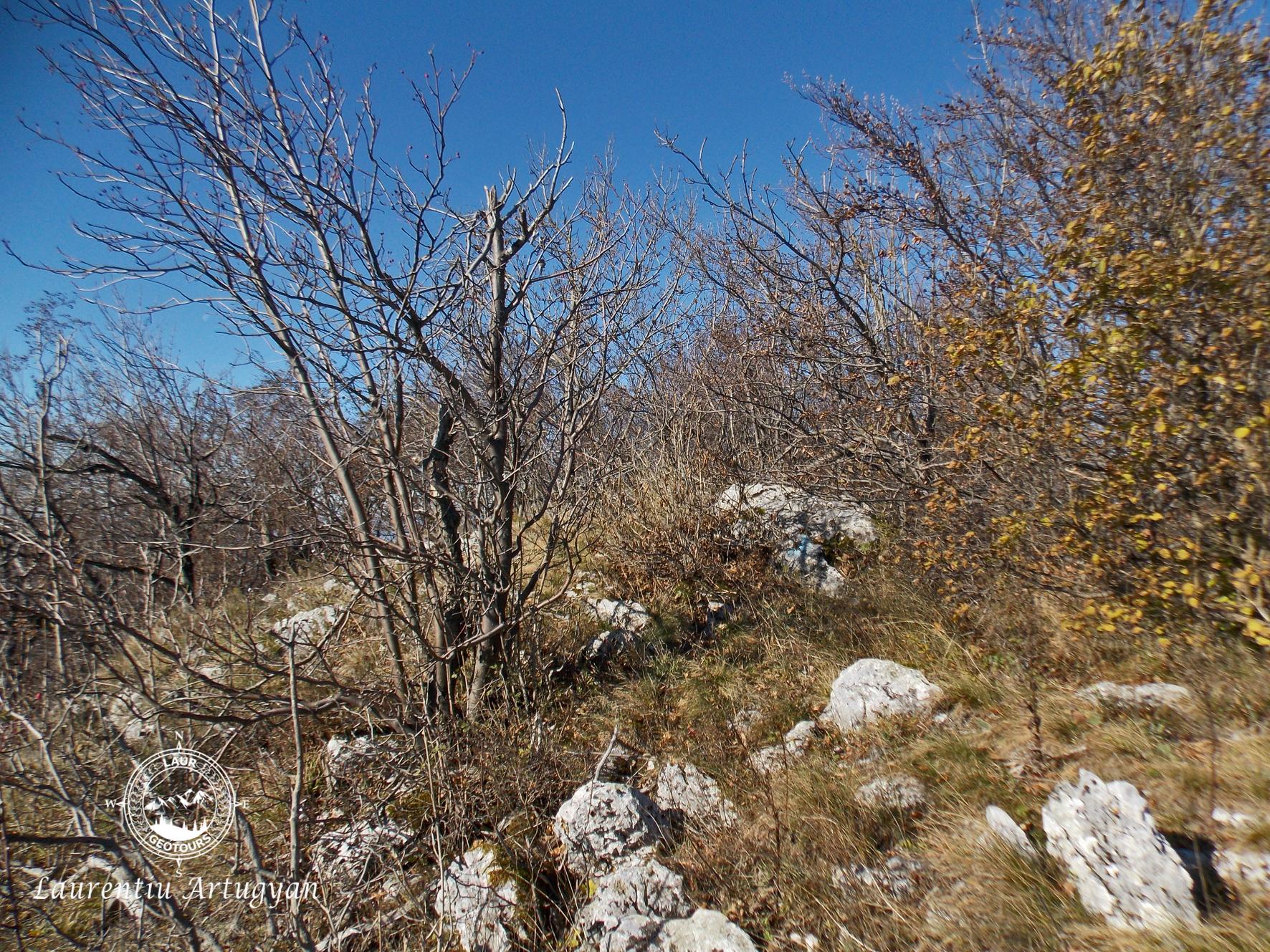 Varful Suscu 1198 metri Domogled