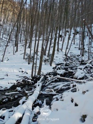 Izvoarele Carasului iarna