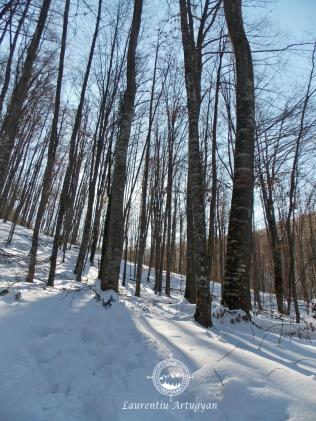 Prin padure iarna spre Izbucul Carasului